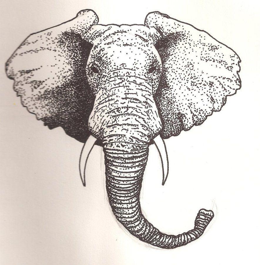 885x902 How To Draw An Elephant Head Elephant Head By ~scheinberg