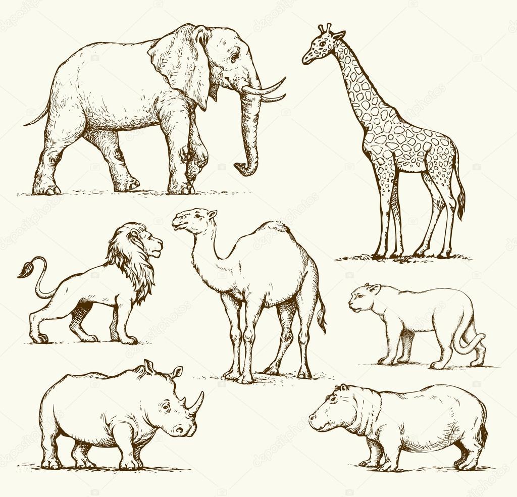 1024x984 African Animals. Vector Drawing Stock Vector Marinka