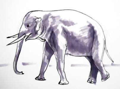 404x300 How To Draw An Elephant