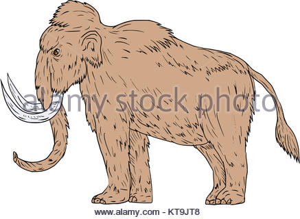437x320 Photo Illustration Of An Elephant Side View Stock Photo, Royalty