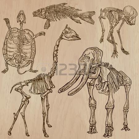 450x449 Elephant Skull Stock Photos. Royalty Free Business Images