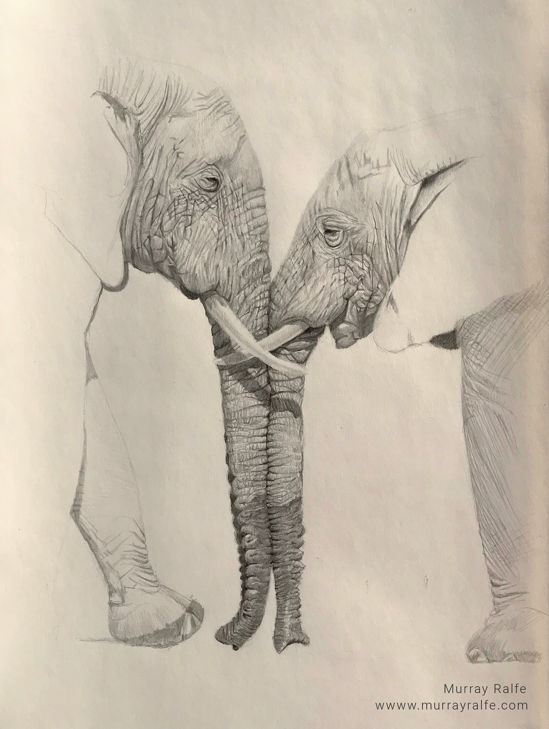 Elephant Trunk Drawing at GetDrawings.com | Free for personal use ...
