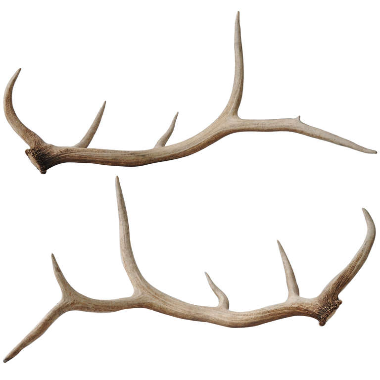 768x768 1stdibs Pair of Elk Antlers Inspirations Pinterest