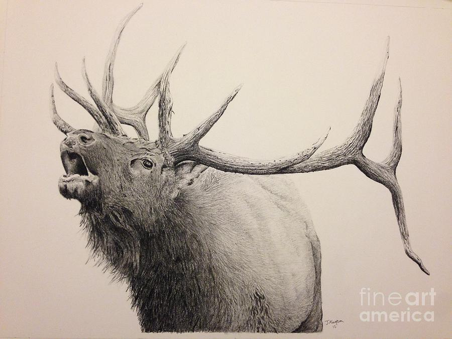 900x675 Elk Bugling Drawing by Jeremy Mattson