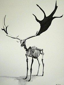 225x300 Irish Elk Skeleton Drawing by Steven Frost