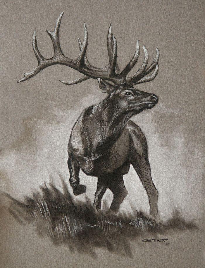 701x912 elk antler drawing