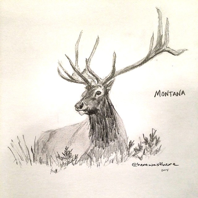 Elk Pencil Drawing at GetDrawings | Free download