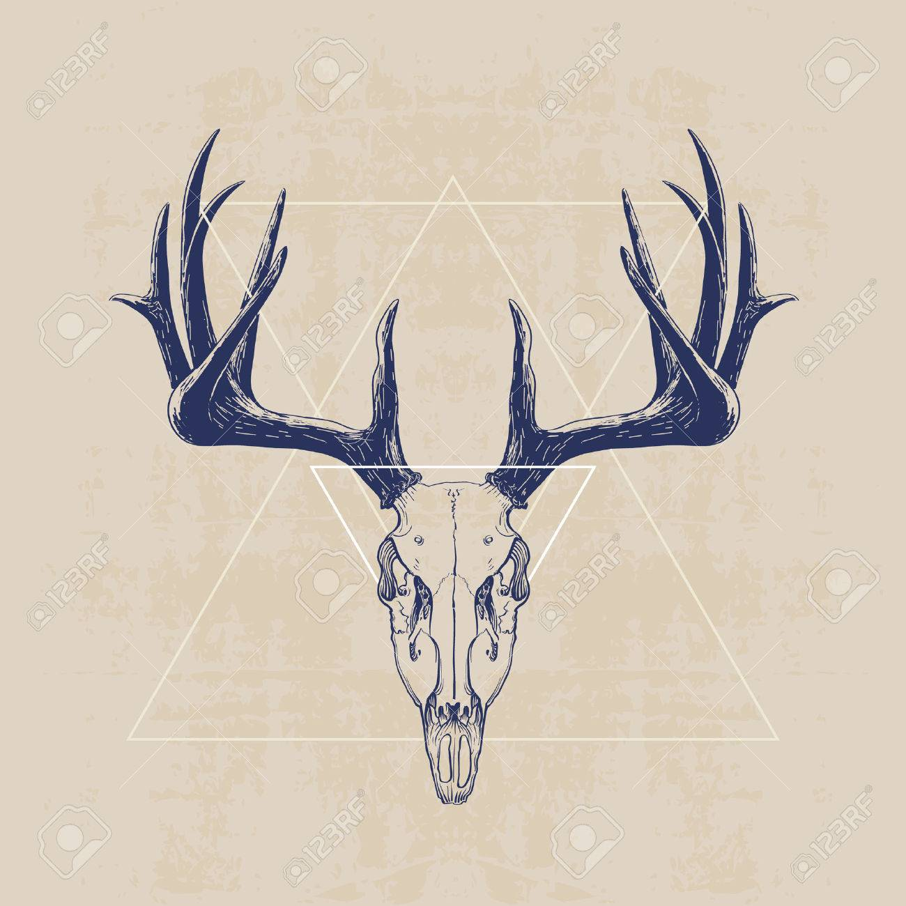 1300x1300 919 Deer Skull Stock Illustrations, Cliparts And Royalty Free Deer
