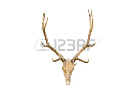 450x300 Elk Head Stock Photos. Royalty Free Business Images