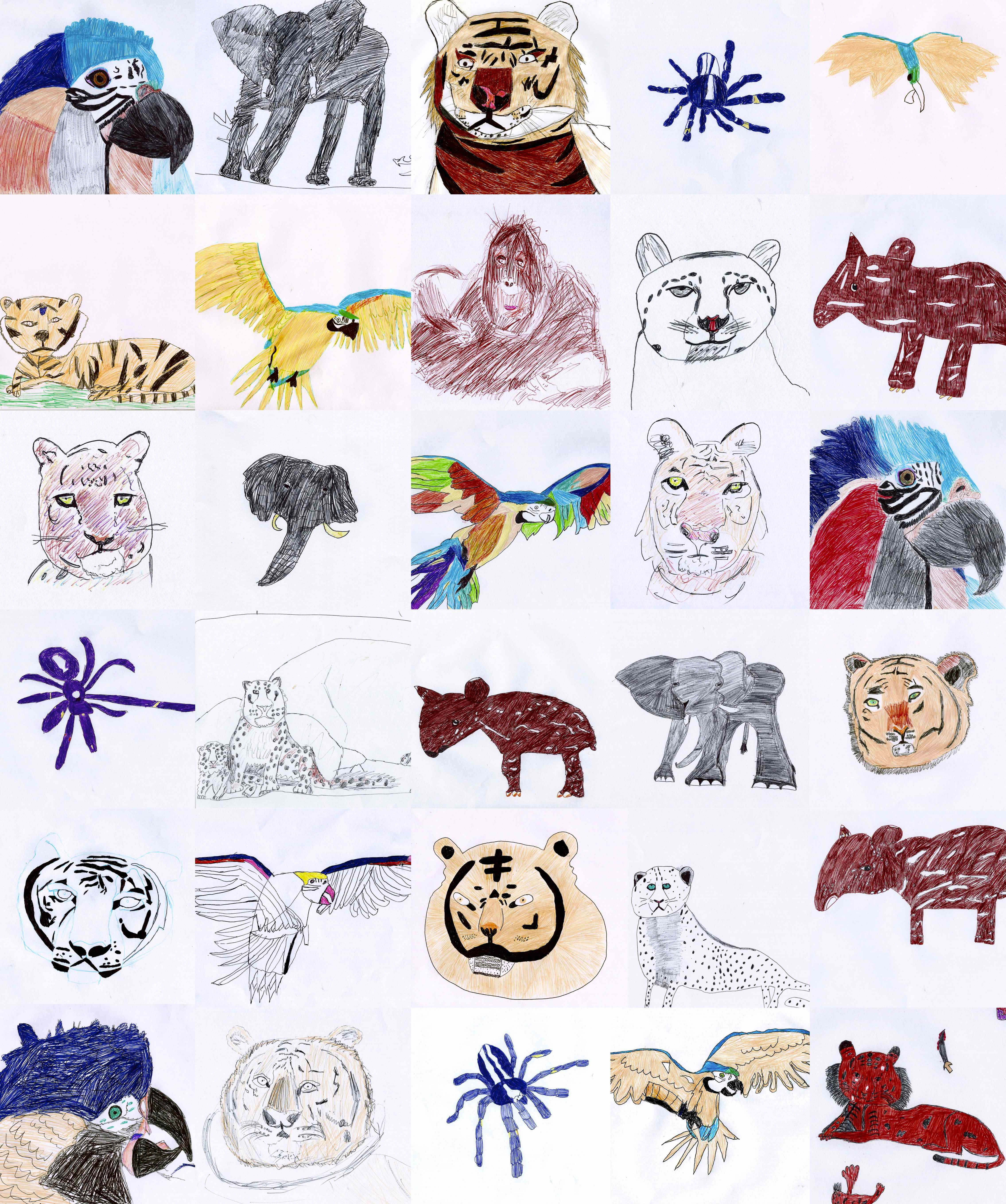 Line Drawings Of Endangered Animals : Endangered animals drawing at getdrawings free for