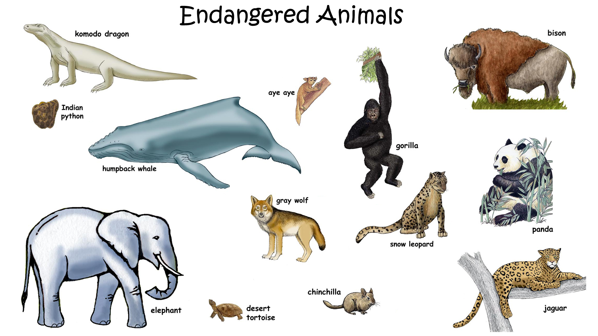 1920x1080 Gallery Endangered Animals For Kids,
