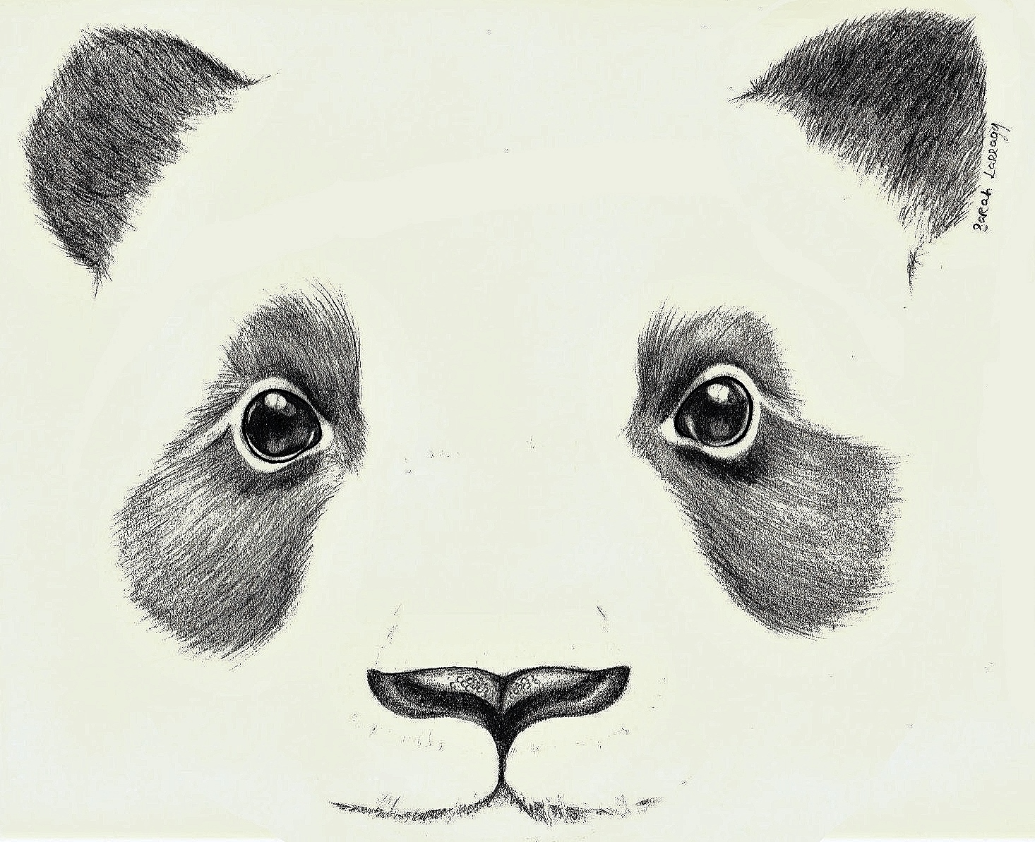 1466x1193 The Giant Panda's Disappearance From The Endangered Species List