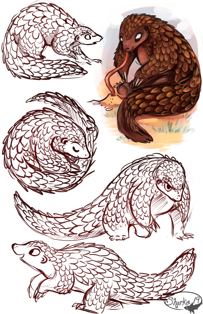 800x1236 Pangolins By Sharkie19 Drawing Guides Drawing