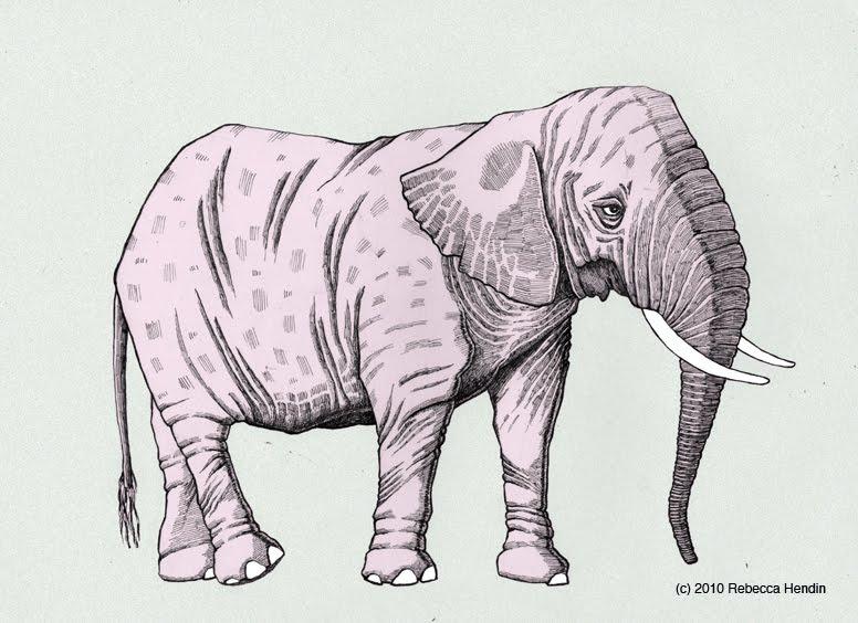776x564 Sketchbeast Endangered Species Drawings