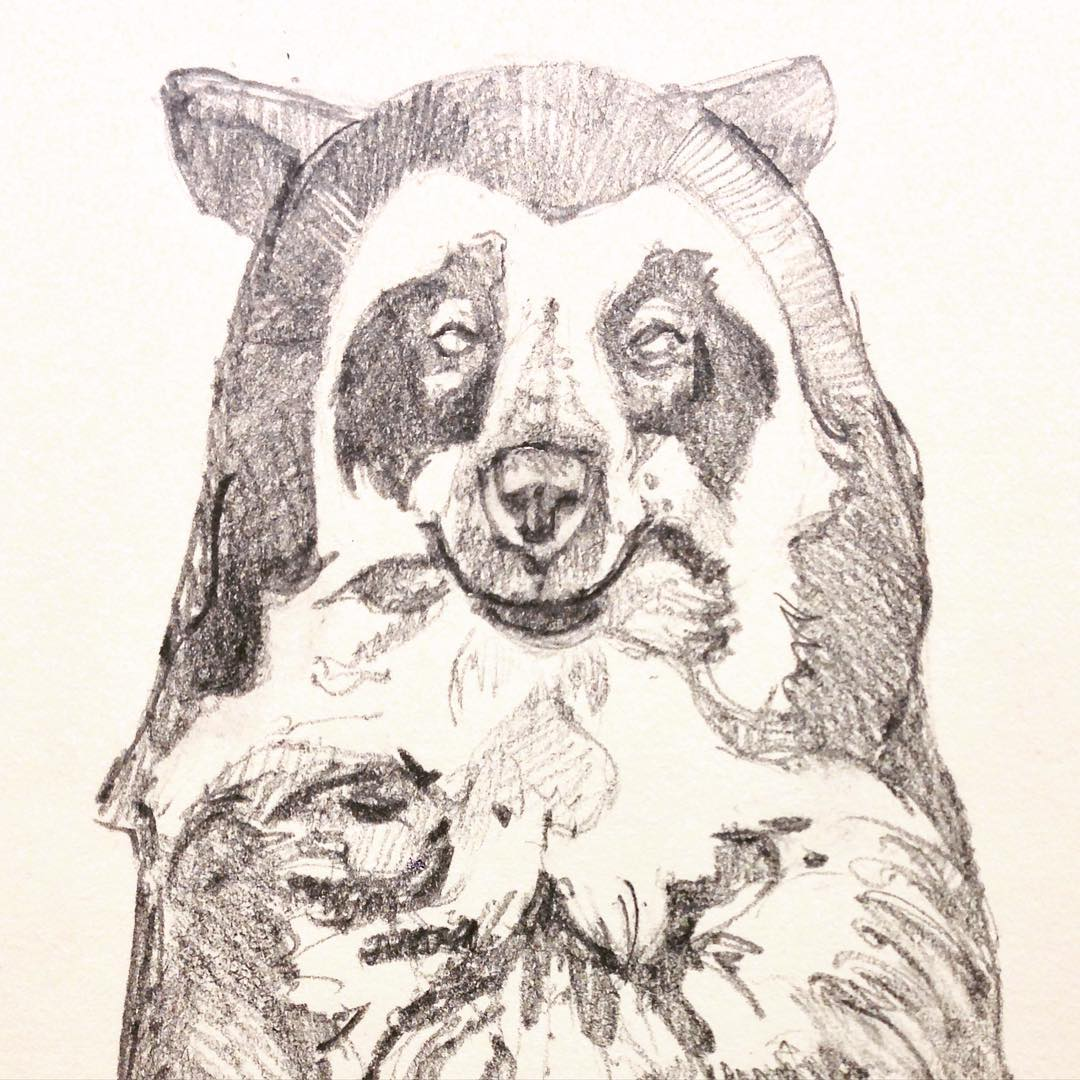 1080x1080 Spectacled Bear!