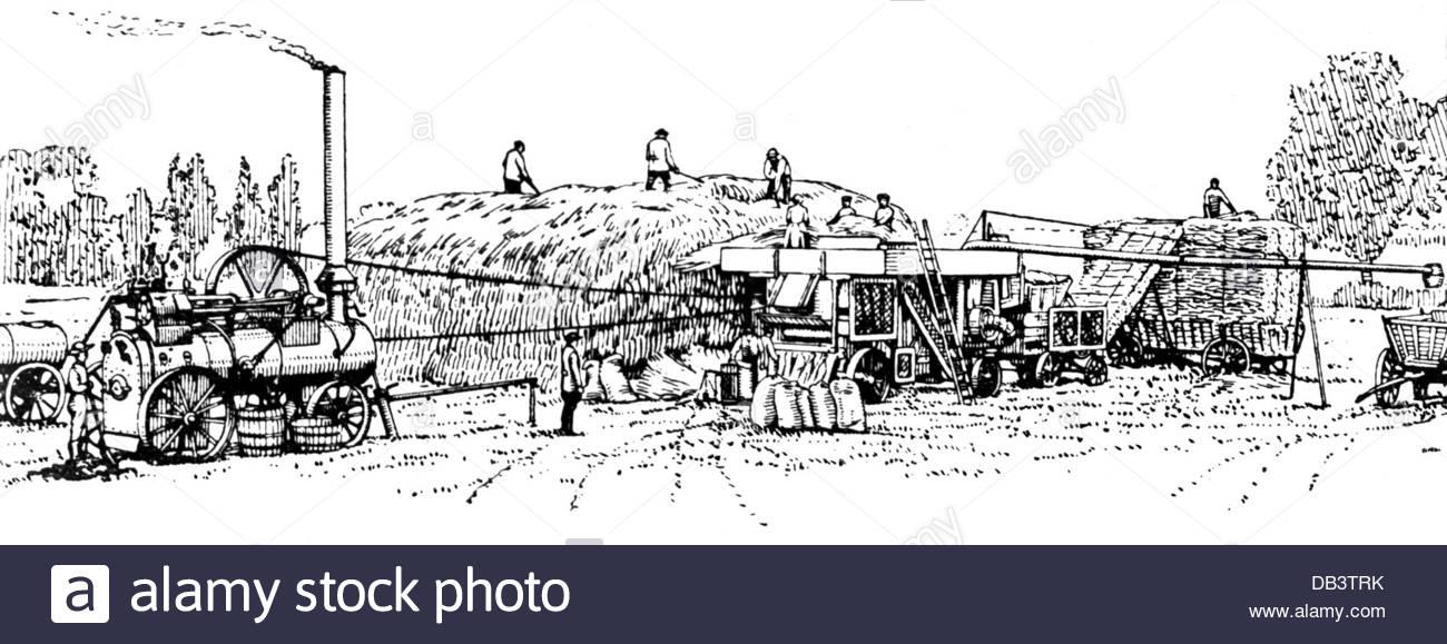 1300x579 Agriculture Farm Labour Harvest Stationary Thresher Elavator Straw