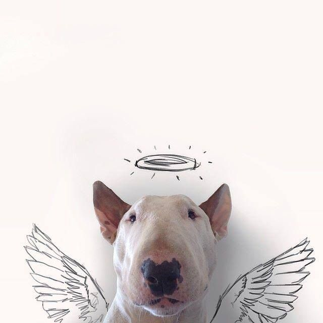 640x640 11 Best Bull Terrier Drawings Images On Dog Owners