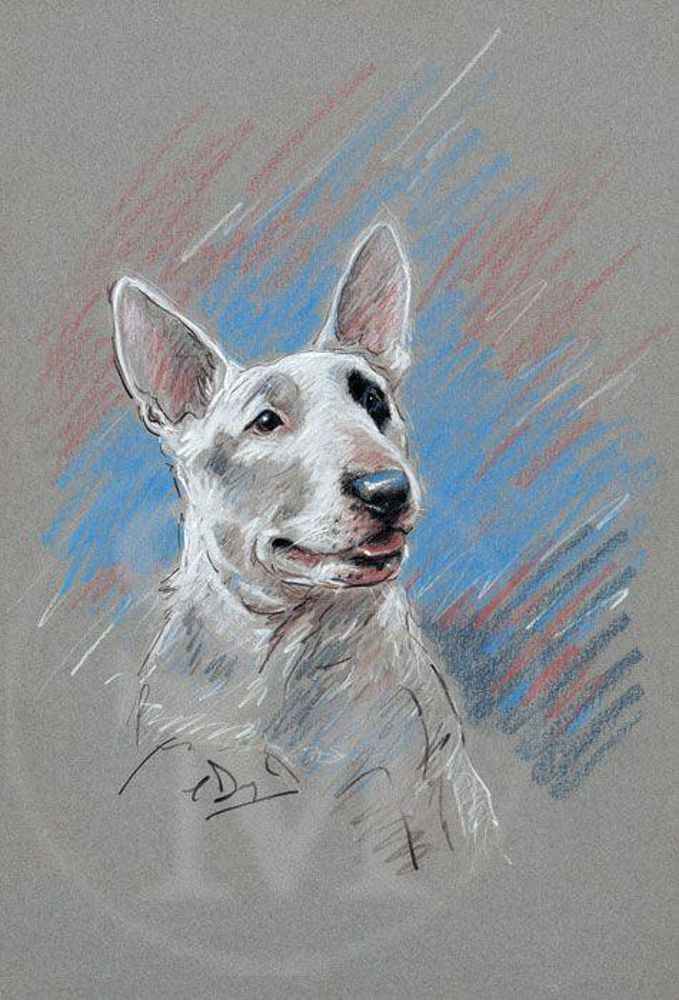 679x1000 English Bull Terrier Pencil Drawing By Paul Doyle.
