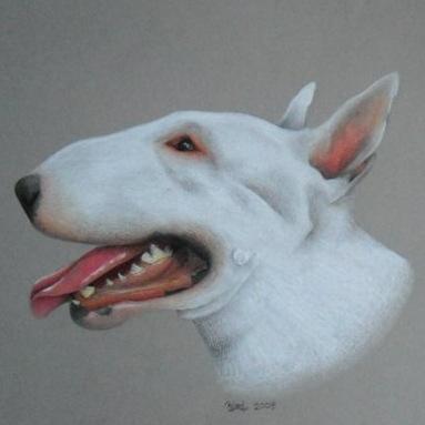 383x383 English Bull Terrier Pencil Drawing My Art English
