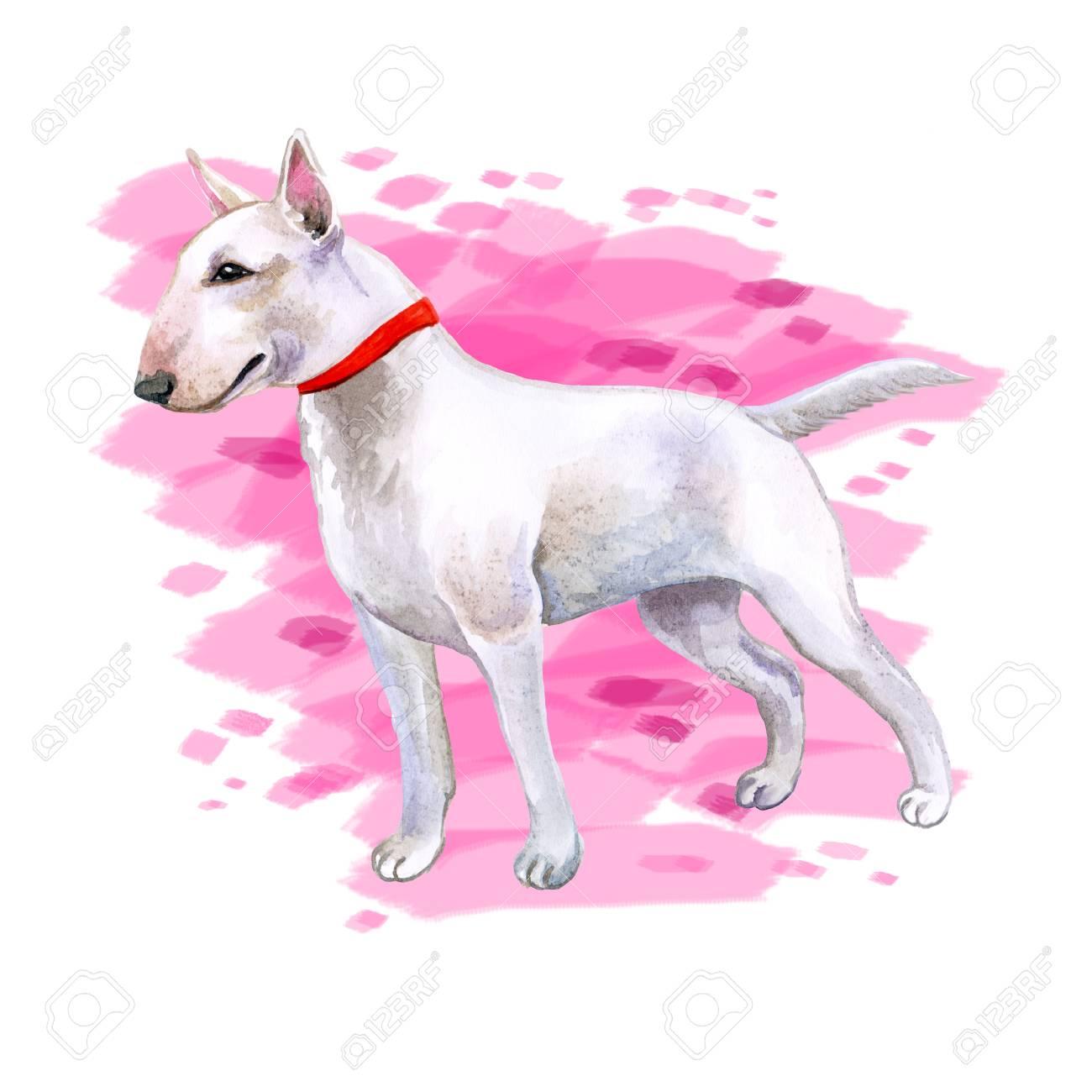 1300x1300 Watercolor Closeup Portrait Of Cute English Bull Terrier Breed Dog