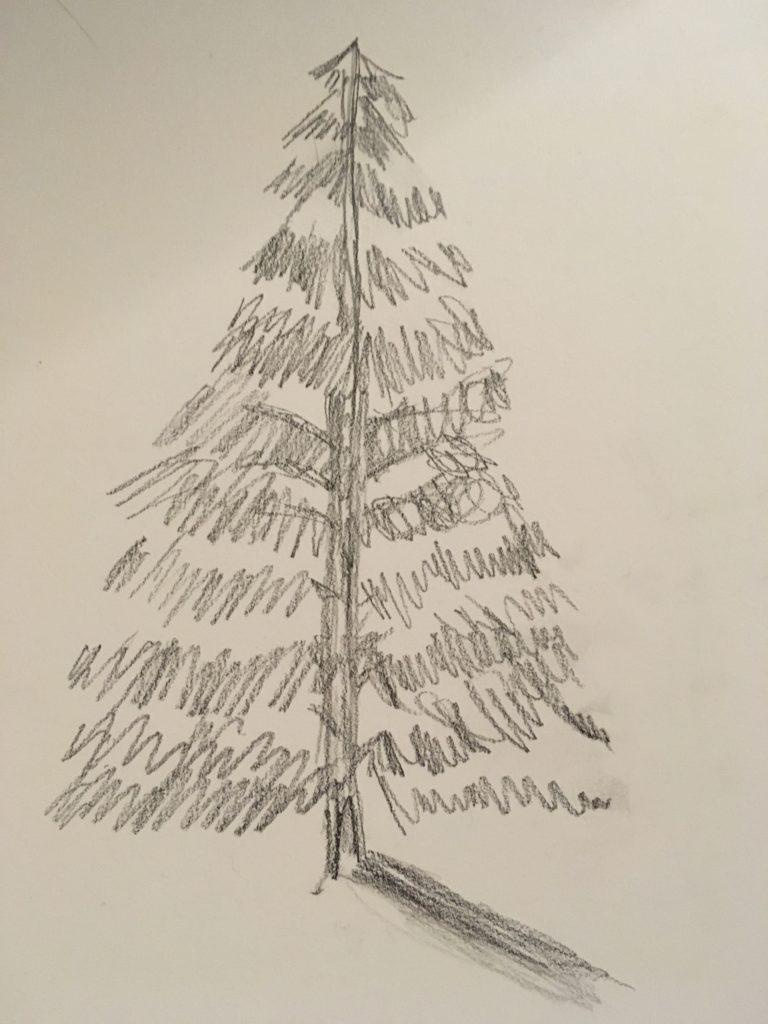 768x1024 Evergreen Tree Generation X Today