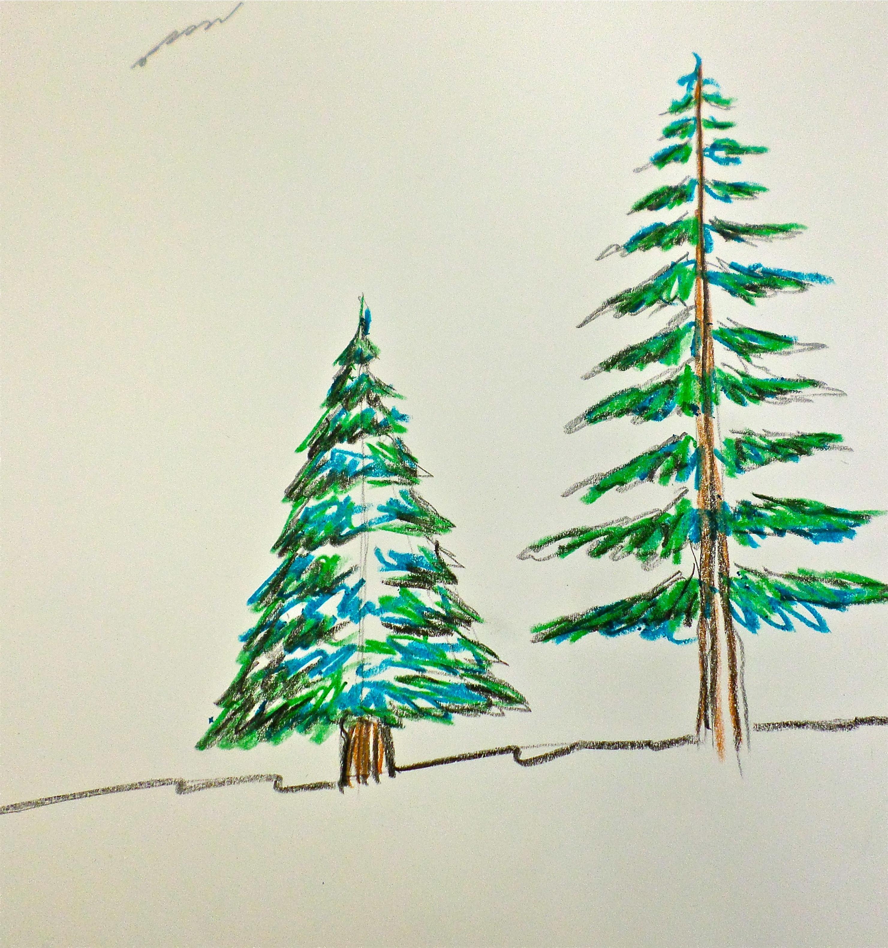 2962x3161 Evergreen Trees Artmanews!