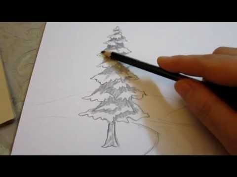 480x360 How To Shade An Evergreen Tree With Pencil