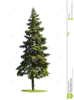 236x320 Evergreen Tree Stencil