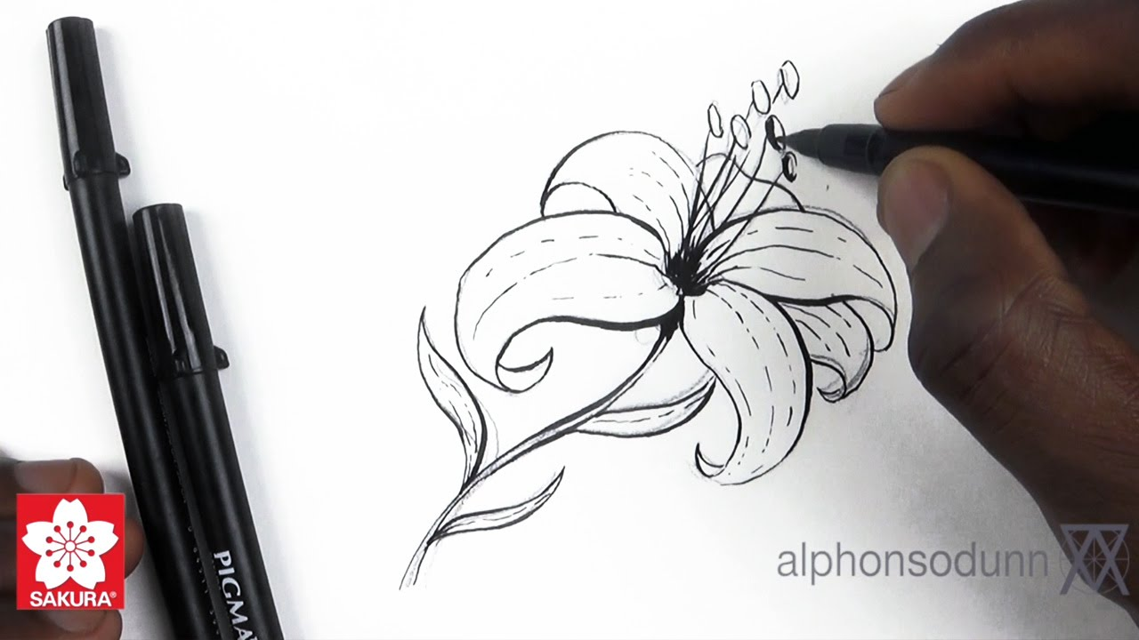 1280x720 How To Draw A Lily Featuring Alphonso Dunn