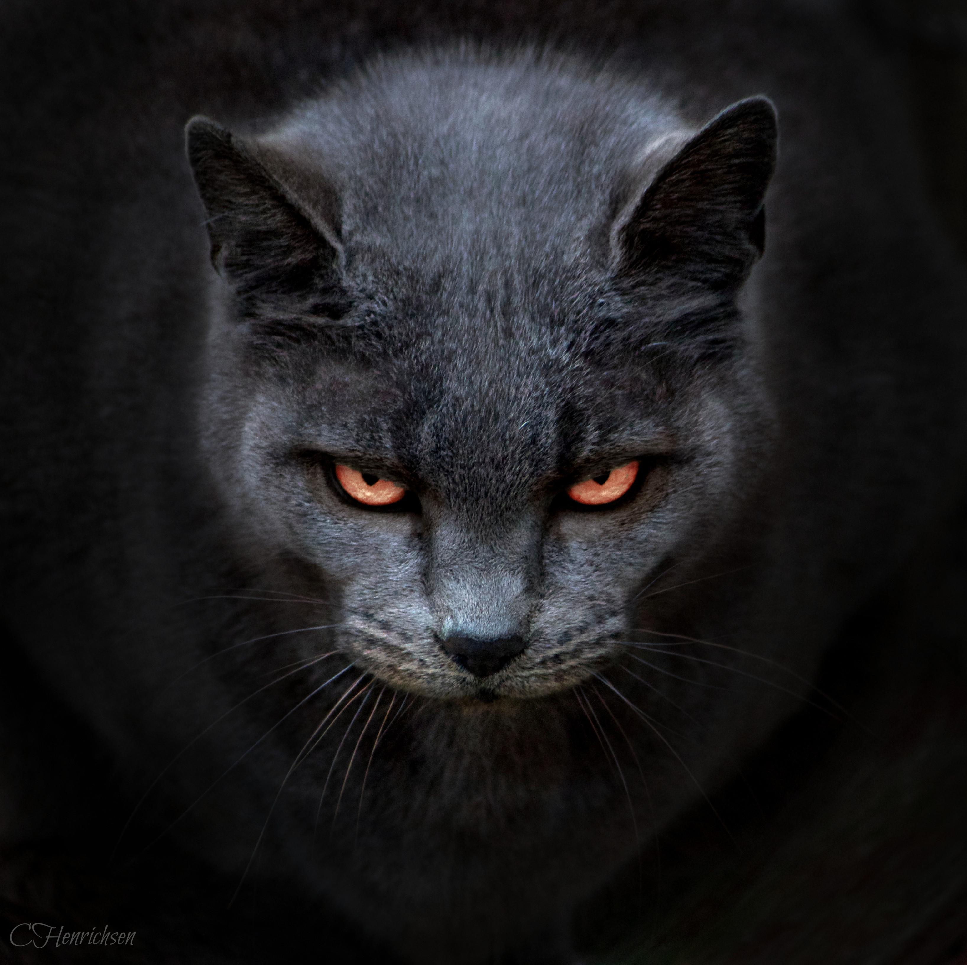 3272x3265 Evil Cat