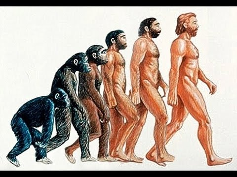 480x360 Evolution The Evolution Of Humans Documentary 2014