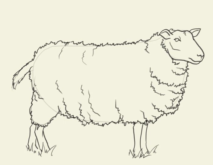 700x545 Drawing And Painting Sheep Drawing How To Draw Sheep Sheep