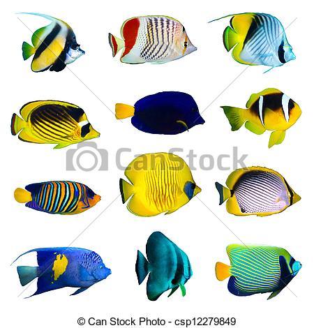 450x470 Tropical Fish Drawing