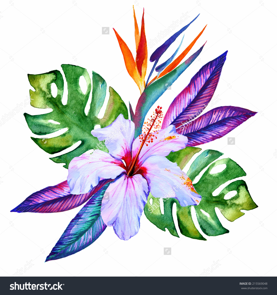 960x1024 Exotic Flower Drawing Tropical Flowers Watercolor Hibiscus