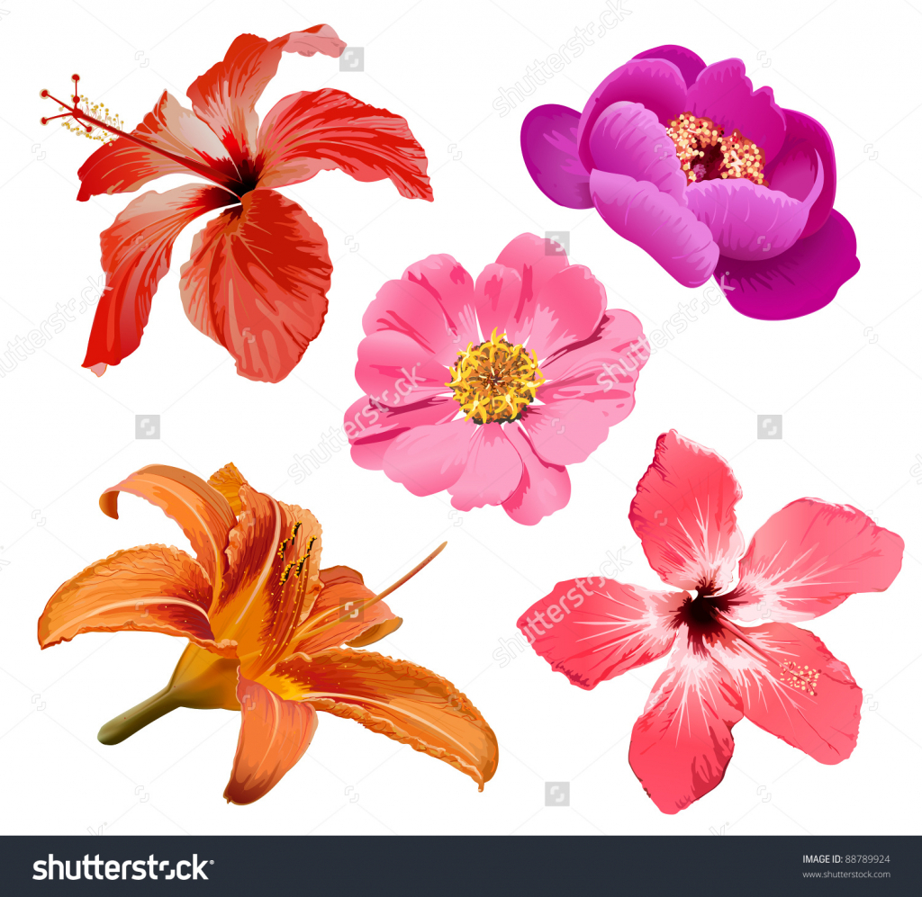 1024x997 Exotic Flower Drawings How To Draw Tropical Flowers
