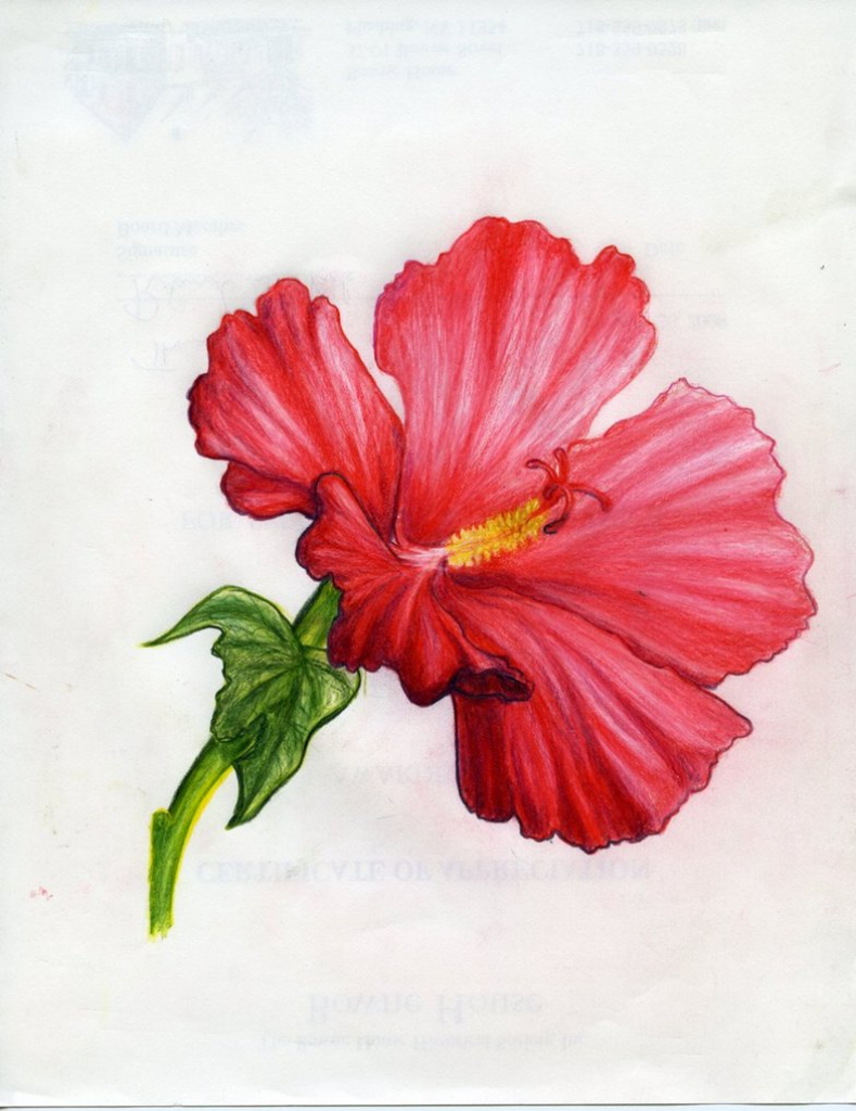 789x1024 Tropical Flower Drawing Exotic Flower Drawing Tropical Flowers