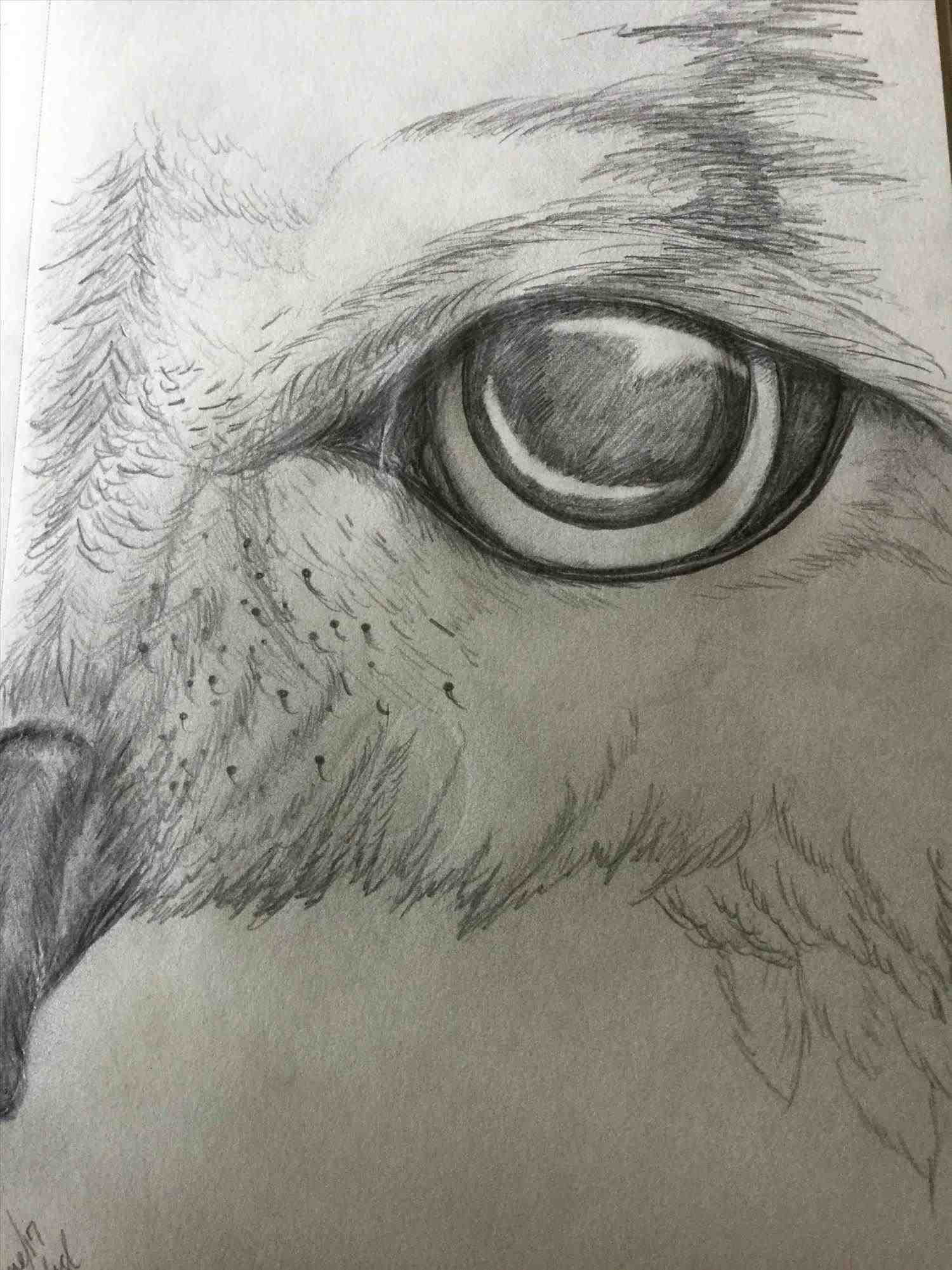 1500x2001 The Images Collection Of Images And Art Drawing Ideas Eyes Best