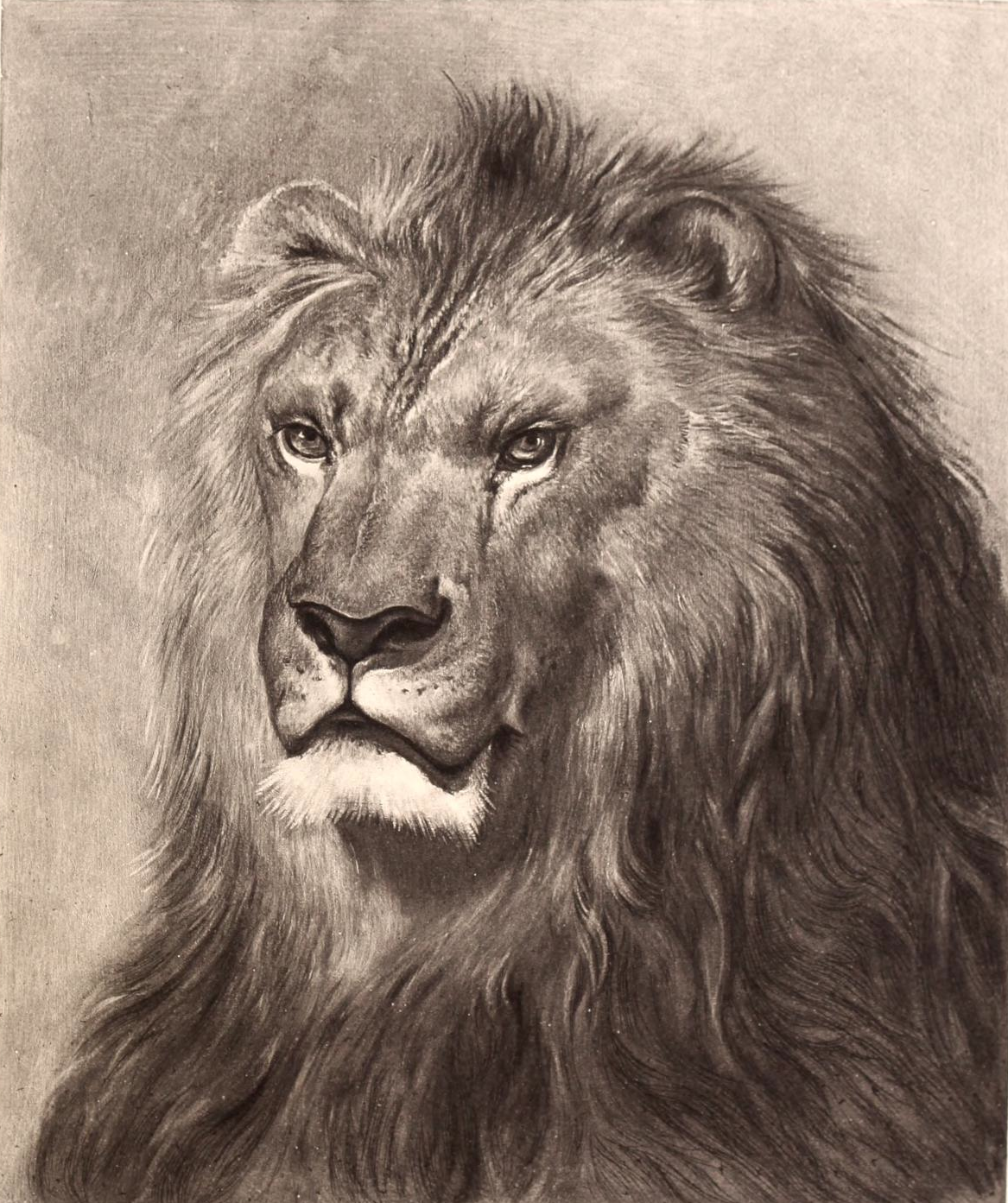 1167x1393 Stunning Vintage Lion Face Drawing
