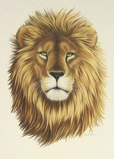 236x328 Images Of Easy Sketches Of Fierce Lions