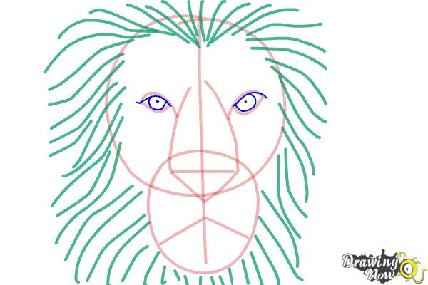 600x400 Steps To Draw A Lion Face How To Draw A Lion Face Drawingnow