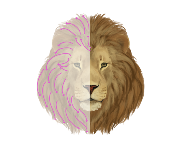Line Drawing Of Sheep Face : Face of lion drawing at getdrawings free for personal use