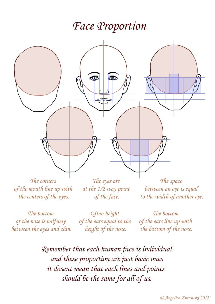 Face Proportion Drawing At Getdrawings Com Free For Personal Use