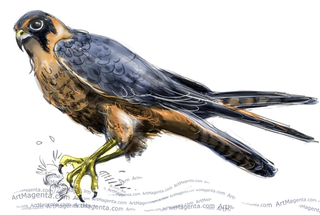 1059x713 Birds Hobby Falcon
