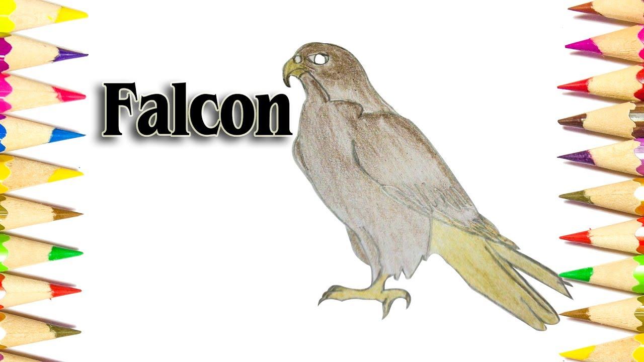 1280x720 How To Draw A Falcon (Bird)