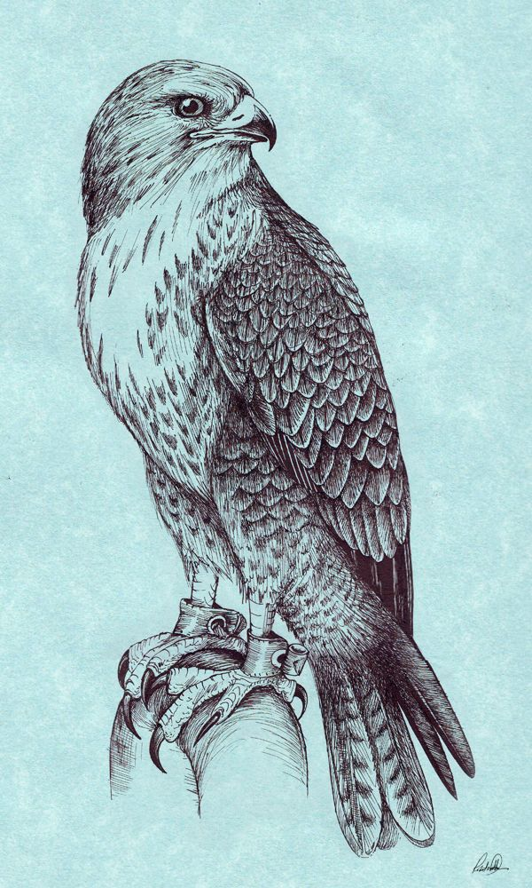 600x1000 Peregrine Falcon By On @ Ink