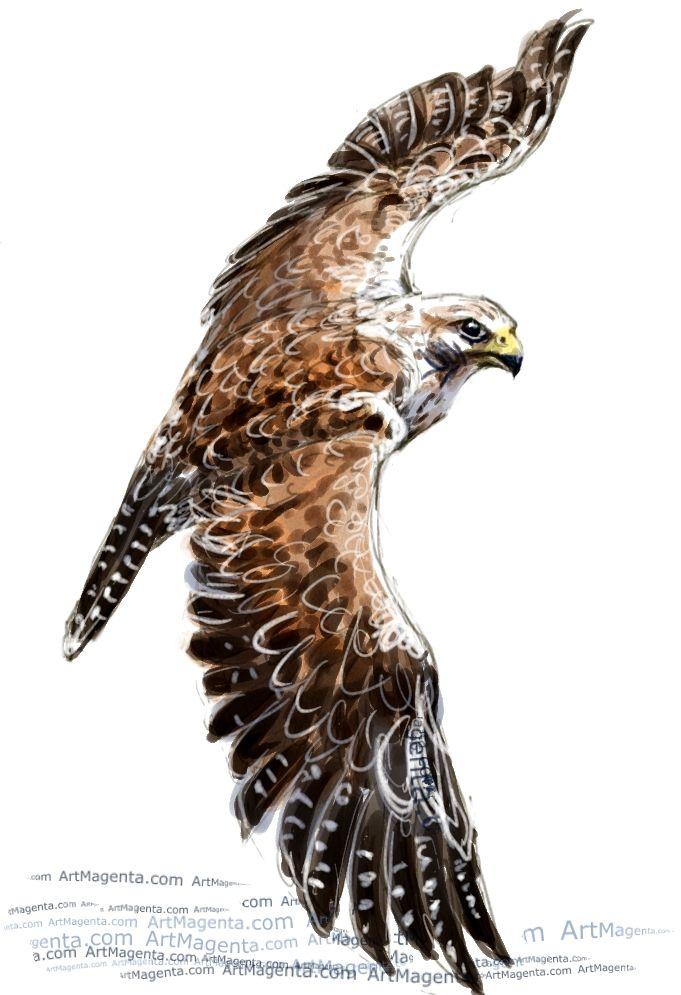 681x995 Saker Falcon Birds Falcons, Illustrators And Drawings