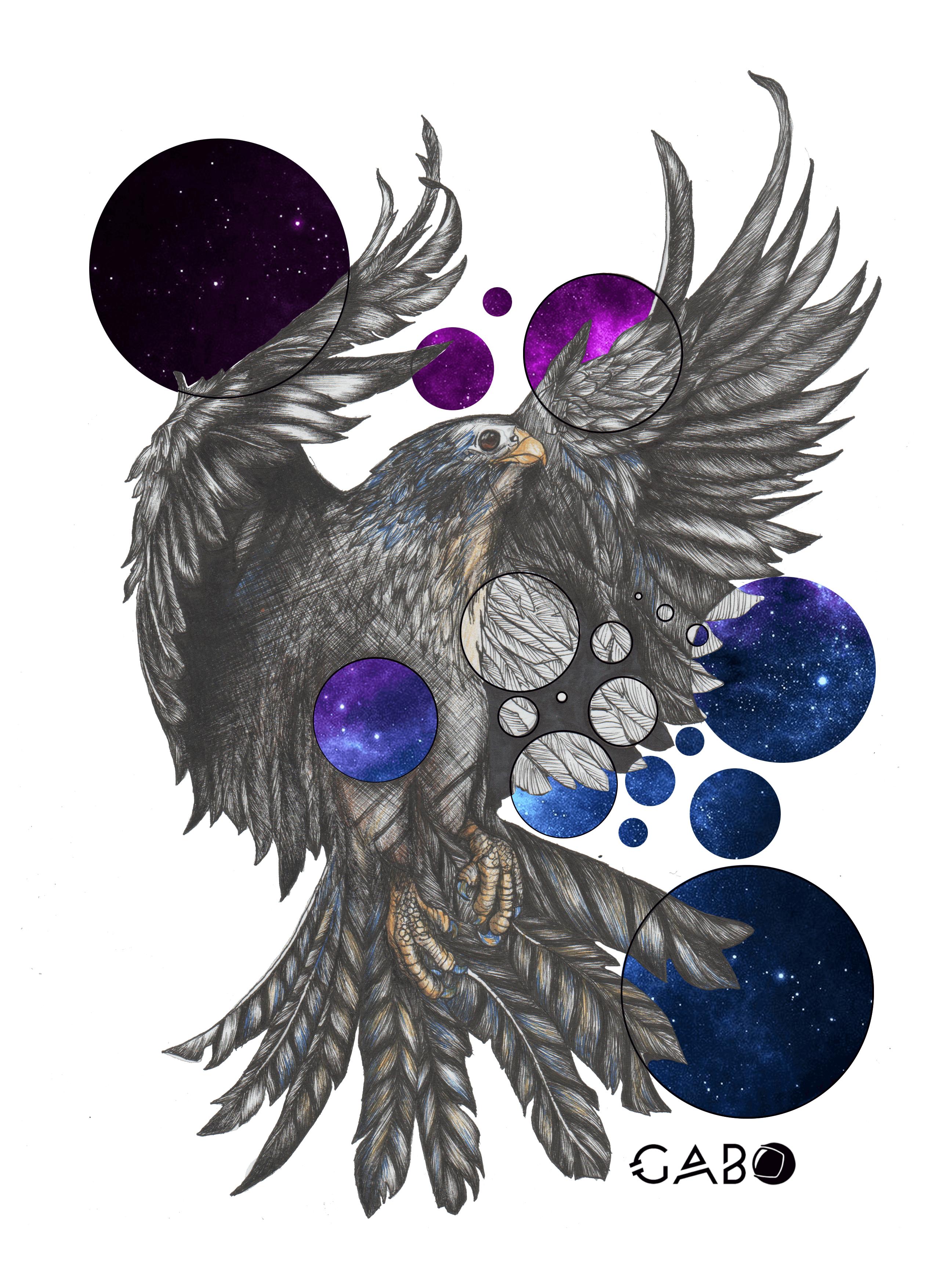 2550x3507 Drawing A Falcon Steemcreations Steemit