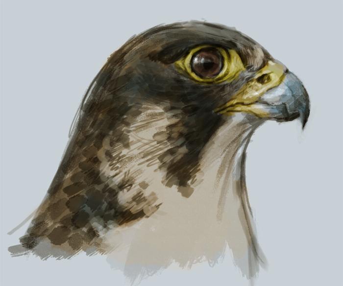 700x584 Painting Falcon Tutorial