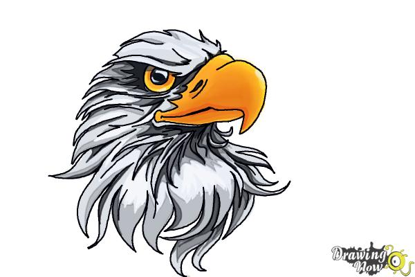 600x400 How To Draw An Eagle Head