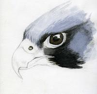 200x194 Peregrine Watercolor Mary Mcandrew